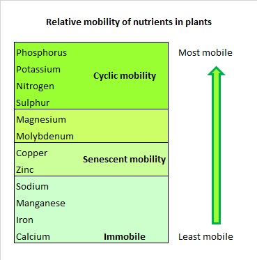 Relative mobility of nutrients