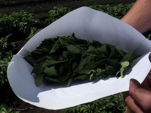 Whole leaf sample