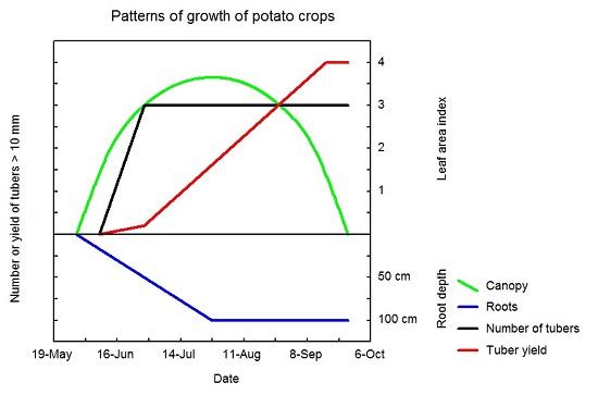 Potato crop growth patterns