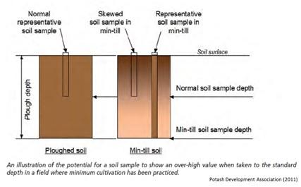 Phosphorus distribution in soil