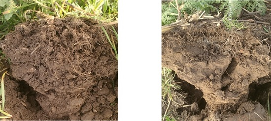 Good and poor soil structure