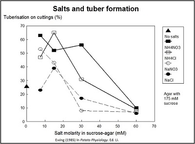 Influence of salts on tuber formation