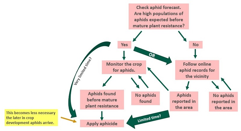 Using aphid monitoring